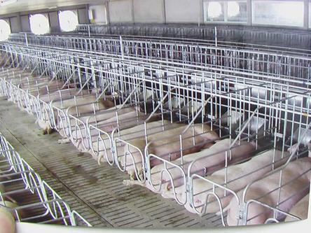 母猪定位⌒栏
